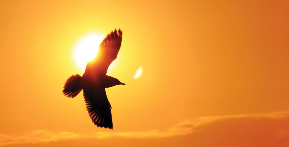 oiseauweb-essentiel